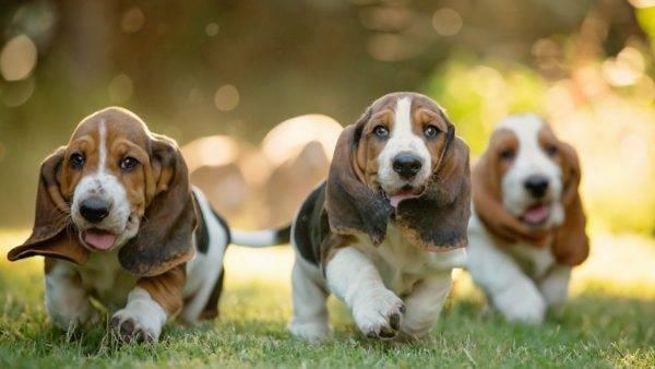 красивые собачки